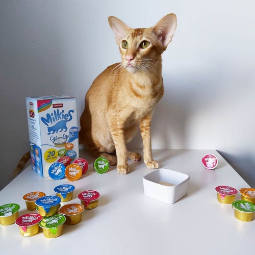 Milkies Cat Snack - kotsztos